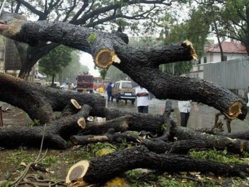Aarey Forest Case: सुप्रीम कोर्ट ने सुनाया बड़ा फैसला, पेड़ों की कटाई पर लगाई रोक