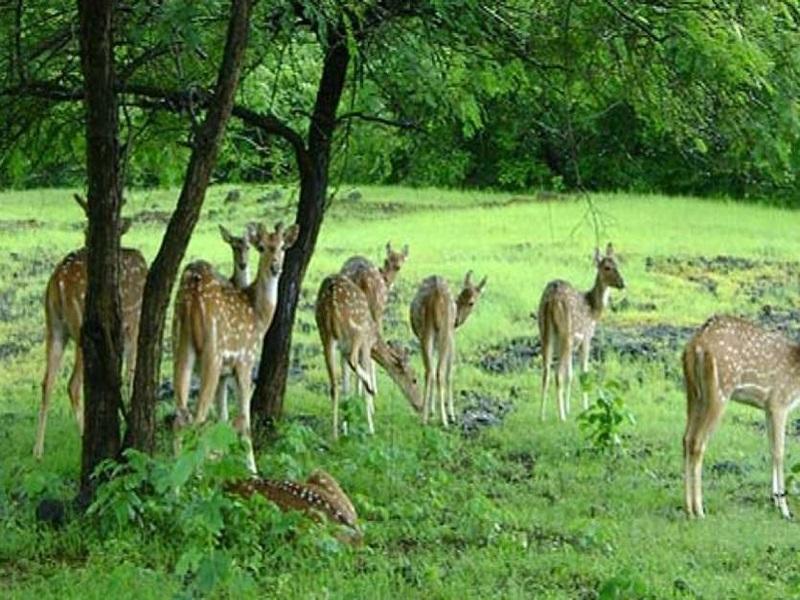 पर्यटन बढ़ाने 12 नए अभयारण्य खोलेगी मध्यप्रदेश सरकार