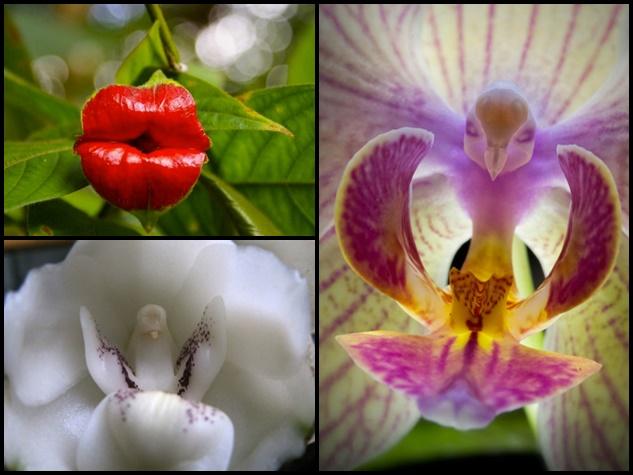 ये फूल हैं या कुछ और, आप देखकर बताइए