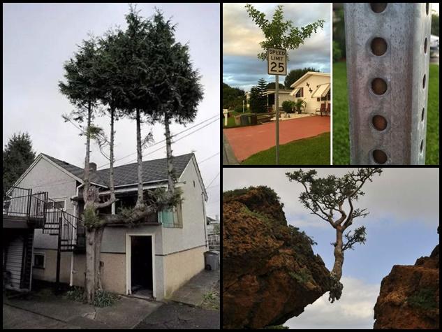 इन अजीबोगरीब जगह उग आए पेड़ कि आप भी बोल उठेंगे WOW