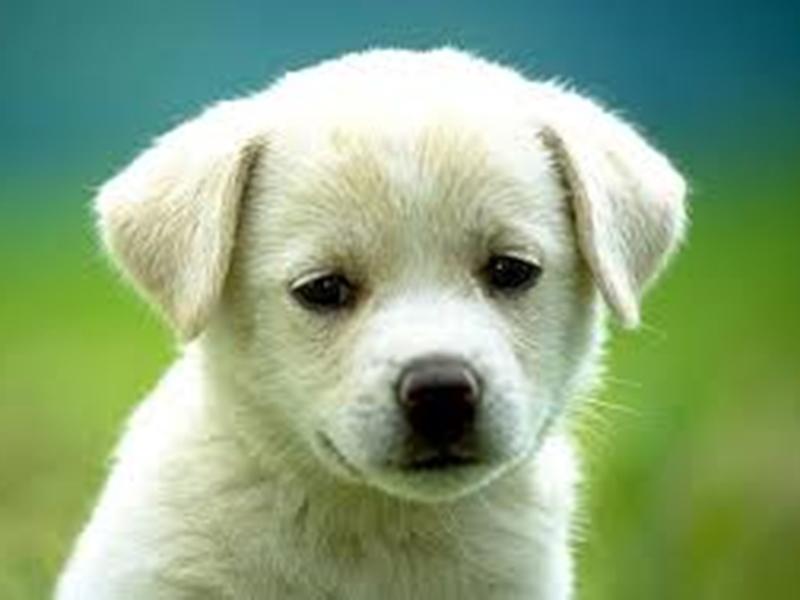 कहानी सुनाकर जगाया बच्चों में पशुओं के प्रति प्रेम, इस तरह मिला ''फ्रेंड्स ऑफ एनीमल'' का पुरस्कार