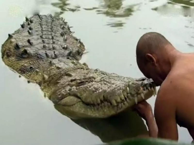 Kerala Crocodile Temple : केरल के इस मंदिर की रखवाली करता है शाकाहारी मगर