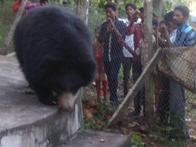 देवी मंदिर में भालू आते हैं प्रसाद खाने