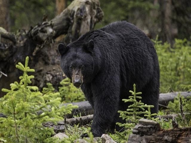 महासमुंद : खेत में काम कर रहे युवक पर भालू का हमला