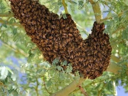 सैर को गए थे अमरकंटक, मधुमक्खियों से कर दी छेड़खानी, तीन की हालत गंभीर
