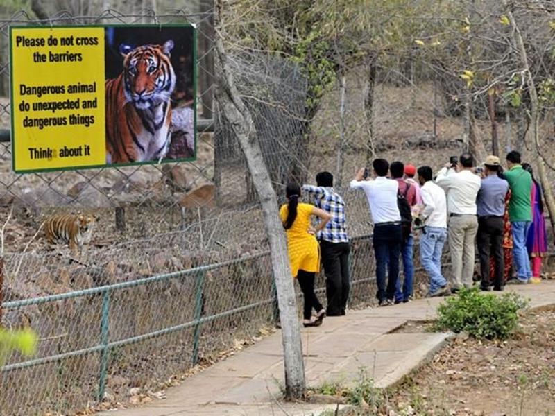 शेर दिखने के फोटो वायरल हुए तो लगा वन विहार से भागा होगा, जाकर देखा तो कुछ और निकला
