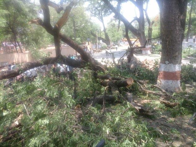 बिलासपुर में पेड़ों की कटाई का जोरदार विरोध