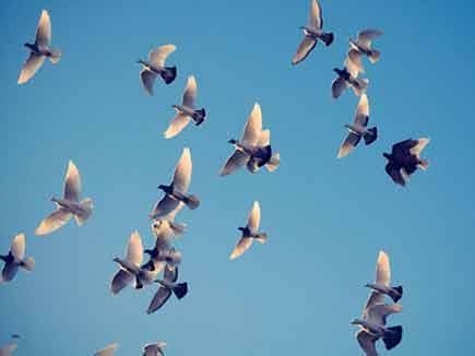 Image result for उड़ते पंछी