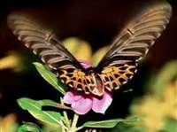 जानें तितली और पतंगों के बीच का भ्रम?