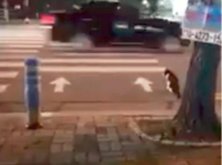ट्रैफिक रूल सिखाने के लिए पुलिस ने पोस्ट किया बिल्ली का वीडियो
