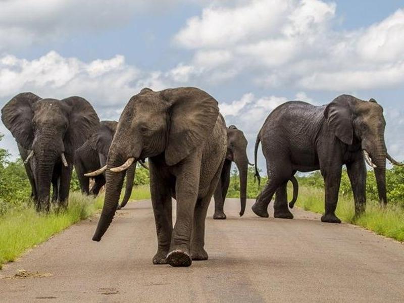 छत्तीसगढ़ में अनूठा ऑपरेशन : कर्नाटक से लाए गए हाथियों की शुरू हुई असली परीक्षा
