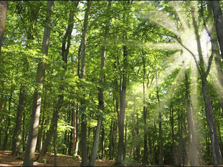 छत्तीसगढ़ के जंगल में कार्बन सोखने की ताकत, इसरो कर रहा सर्वे