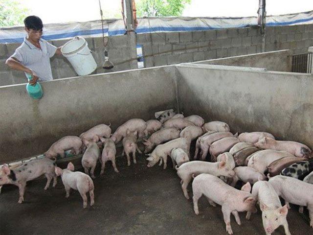 भारतीयों के लिए सुअर पालन का अच्छा समय, जानिए क्यों होगा इस बिजनेस में जबरदस्त फायदा