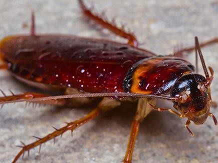 cockroaches 1 02 12 2017