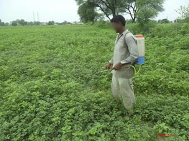 किसानों पर फसल बीमा के लिए जोर जबरदस्ती नहीं : खाद्य मंत्री