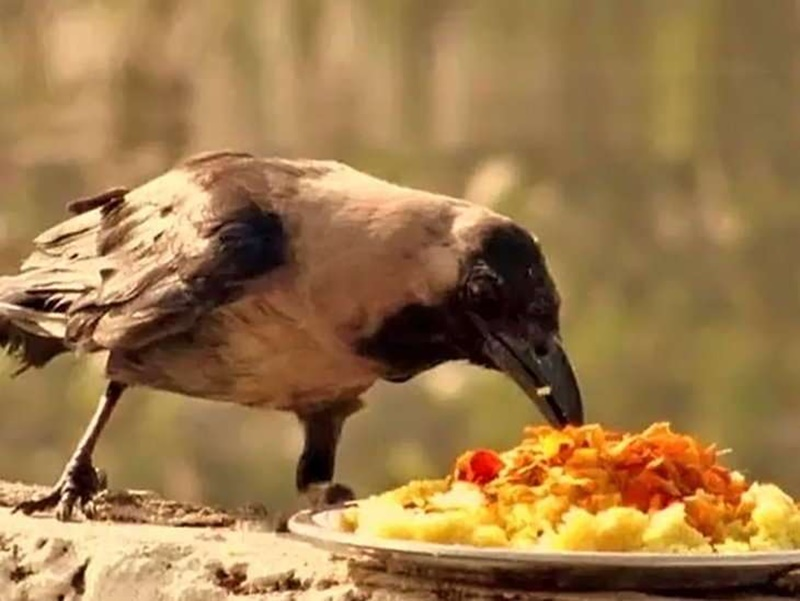 Shraddh Paksh 2019 : श्राद्ध में पितृों तक ऐसे पहुंचता है भोजन और इस तरह देते हैं पितृ आशीर्वाद
