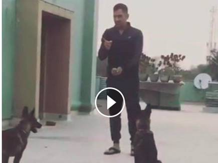 dhoni with his dogs 17 02 2017