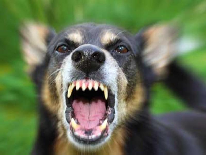 Bilaspur News : आंगन में खेल रहा था 3 साल का बच्चा, कुत्ते ने नोंच डाला