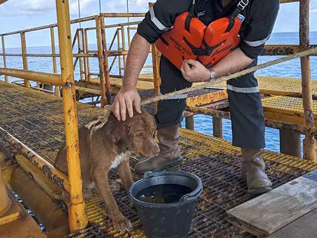 तैरते हुए 220 किलोमीटर दूर चला गया था कुत्ता,  ऐसे चला रेस्क्यू ऑपरेशन और फिर...
