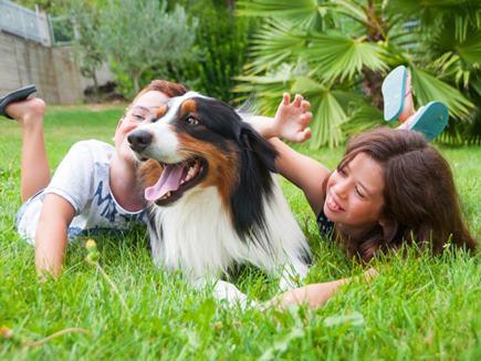 बीमार व्यक्ति के सामने ऐसी हरकत करे कुत्ता तो होगा अपशगुन, ये संकेत भी होते हैं अशुभ
