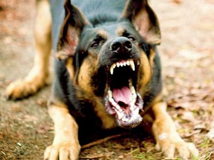 जितने कुत्तों की रोज नसबंदी होती है, उससे पांच गुना बढ़ जाती है इनकी संख्या