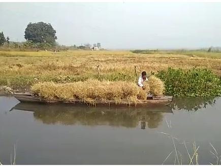 VIDEO : डुबान के टापू में नाव के सहारे खेती किसानी