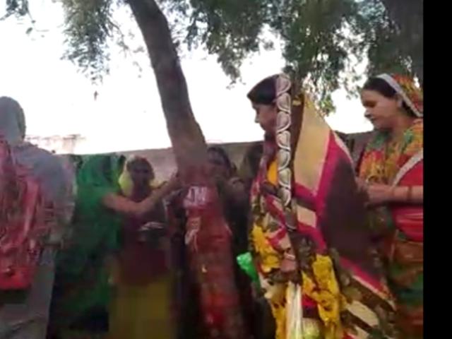 Amalaki Ekadashi 2019 : व्रत रखकर मनाई आमलकी और रंगभरी एकादशी
