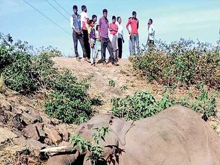 छत्तीसगढ़ में12 वर्षों में करंट से 34 हाथियों की मौत पर हाईकोर्ट गंभीर