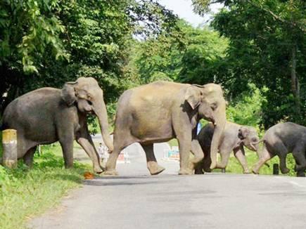 बंद होगी इंसान व जंगली हाथी की लड़ाई, मास्टर प्लान तैयार