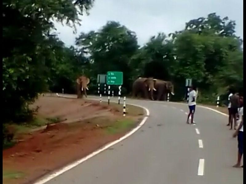महासमुंद के पास गांव में घुसे हाथी, दहशत में आए ग्रामीण छत पर चढ़े
