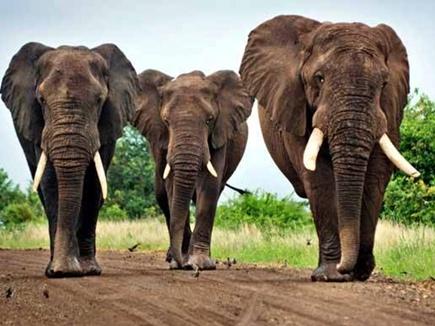 रायगढ़ जिले में 11 हाथियों के दल ने 6 घरों को तोड़ा