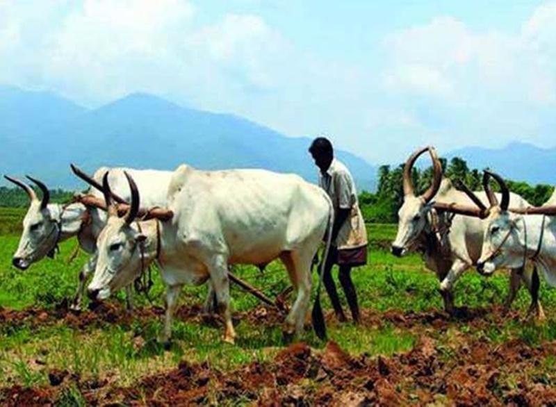 बजट में किसानों के लिए बड़ी योजनाओं का ऐलान कर सकती है सरकार