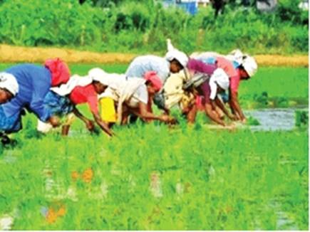 पांच एकड़ से कम वाले पौने दो लाख किसान, रायगढ़ में बटेंगे 34 करोड़