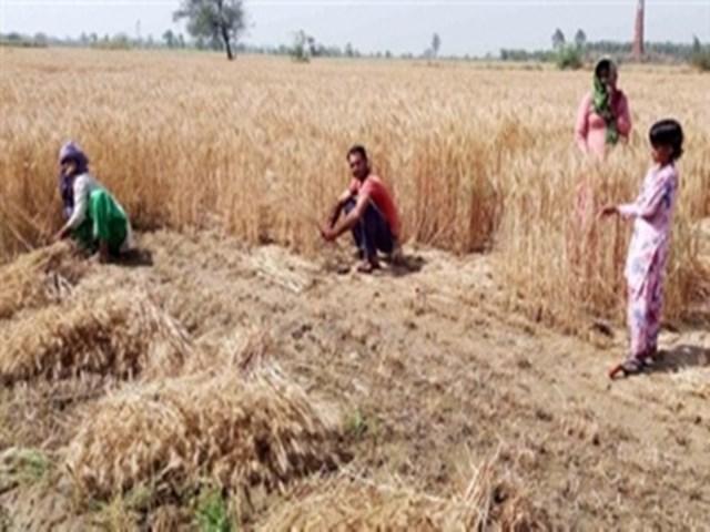 Madhya Pradesh: कर्ज की राशि कटने के डर से किसान मंडी में नकद में बेच रहे अपनी उपज