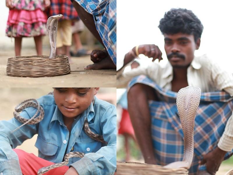 VIDEO : एक गांव ऐसा जहां दहेज के रूप में पिता बेटी को देता है 21 सांप