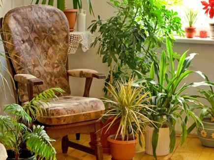 VIDEO: घर में कौन से पौधे लगाएं और कौन से नहीं