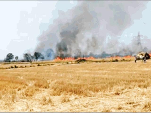 चिंगारी से लगी आग, गेहूं के लहलहाते खेत 3 घंटे में राख
