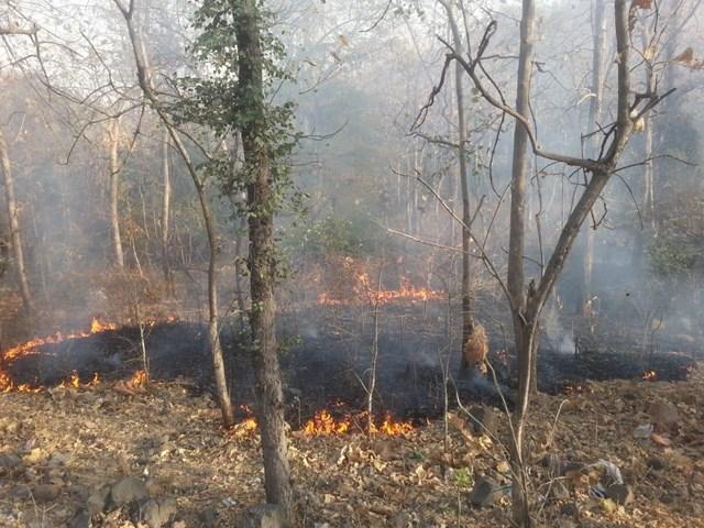 सैटेलाइट से निकला सच, MP के जंगल आगजनी में सात दिन में बने नंबर वन