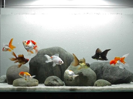 घर में एक्वेरियम रखने की ये होती है सही जगह, मछली मरने पर करें ये उपाय