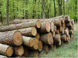वन अधिकार के उल्लंघन पर लगेगा एट्रोसिटी एक्ट