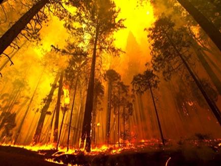 पिछले साल 33 हजार बार जंगलों में लगी आग,एफएसआई का खुलासा