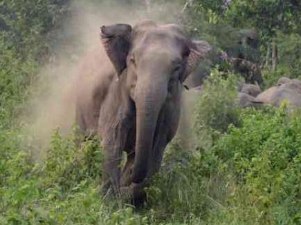 हाथियों का आंतक