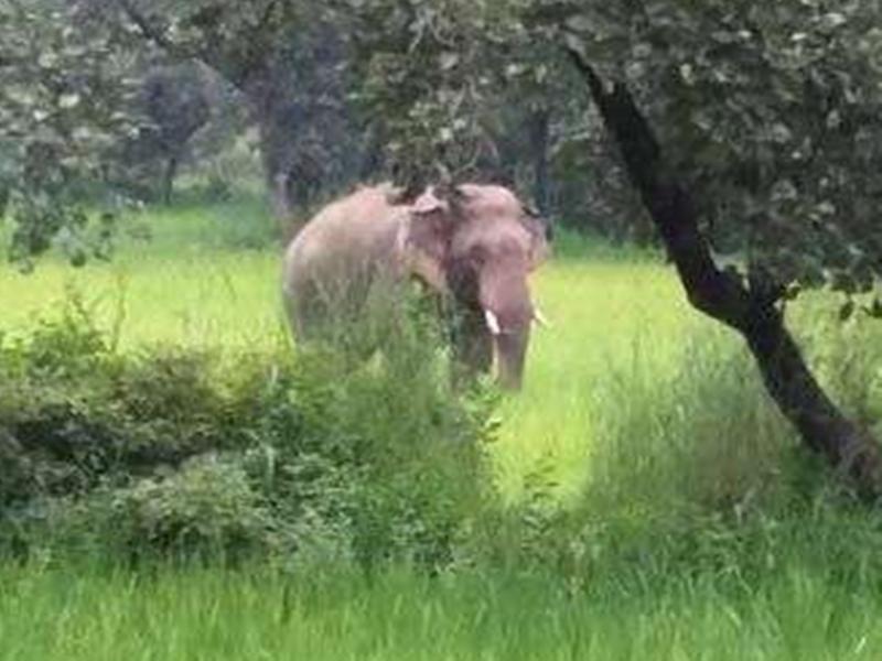 उत्तर छत्तीसगढ़ में सिलसिलेवार मौतों का आरोप गणेश हाथी पर