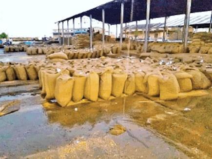 सुसनेर में आंधी के साथ तेज बारिश से 5 हजार क्विंटल अनाज भीगा