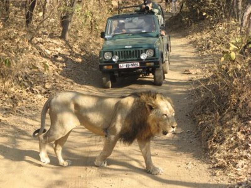 Gir Sanctuary : चार महीने बंद रहने के बाद पर्यटकों के लिए खोल दिया गया गिर अभयारण्य