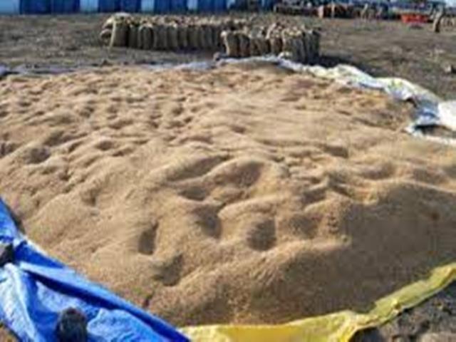 Cyclone Fani effect in MP : मध्यप्रदेश में बारिश की संभावना, खुले में रखे अनाज को गोदामों में पहुंचाने के निर्देश