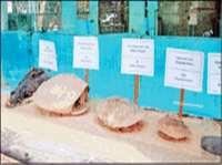 ईको सेंटर के हैचरी में शुरू हुआ जलीय जीव संग्रहालय