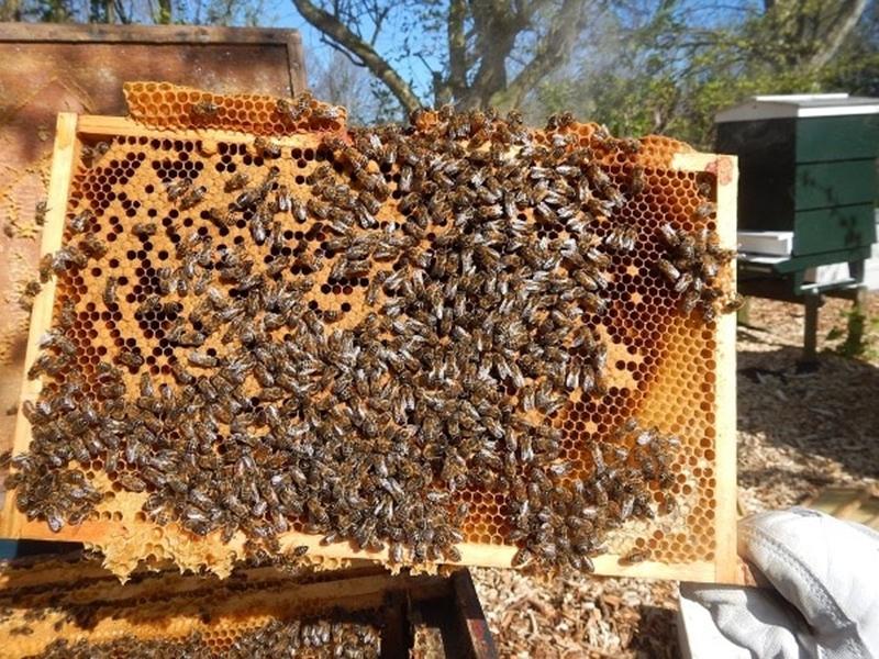 सरकारी नौकरी छोड़ शुरू किया मधुमक्खी पालना, आज लाखों में खेल रहे