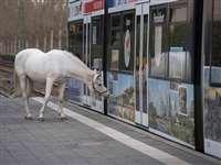 पिछले 14 सालों से अकेले जर्मनी की सड़कों पर घूमने निकलती है यह घोड़ी