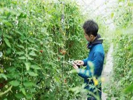 horticulture 12 01 2018